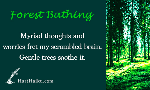 Forest Bathing   Myriad thoughts and worries fret my scrambled brain. Gentle trees soothe it.   HartHaiku.com