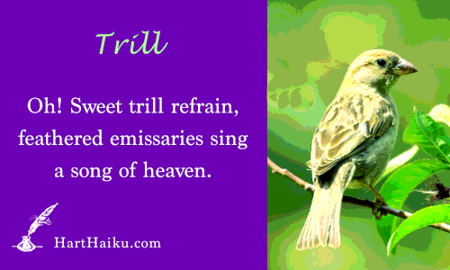 Trill | Oh! Sweet trill refrain, feathered emissaries sing a song of heaven. | HartHaiku.com