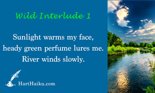 Wild Interlude 1 | Sunlight warms my face, heady green perfume lures me. River winds slowly. | HartHaiku.com