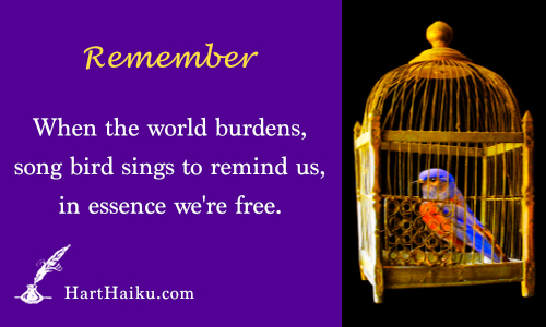 Remember | When the world burdens, song bird sings to remind us, in essence we're free. | HartHaiku.com