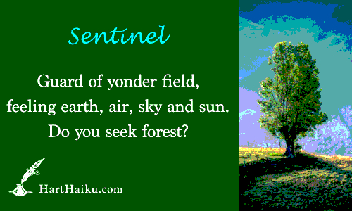 Sentinel | Guard of yonder field, feeling earth, air, sky and sun. Do you seek forest? | HartHaiku.com