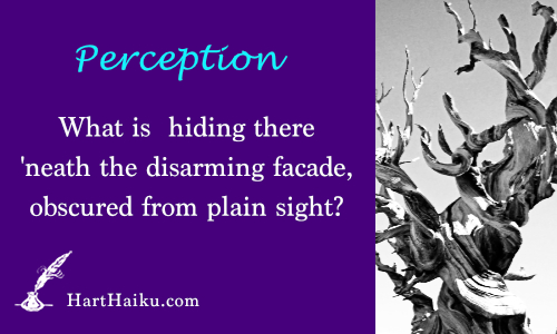 Perception | What is hiding there 'neath the disarming facade, obscured from plain sight? | HartHaiku.com