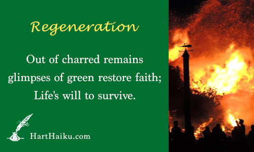 Regeneration | Out of charred remains glimpses of green restore faith; Life's will to survive. | HartHaiku.com