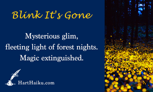Blink It's Gone | Mysterious glim, fleeting light of forest nights. Magic extinguished. | HartHaiku.com
