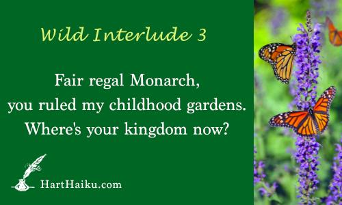 Wild Interlude 3 | Fair regal Monarch, you ruled my childhood gardens. Where's your kingdom now? | HartHaiku.com