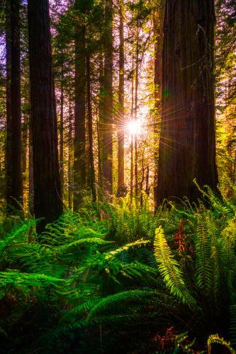 TreeSecrets_post