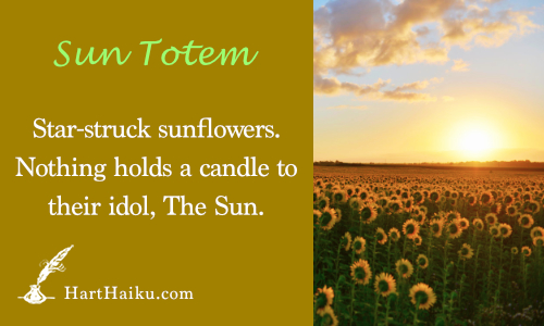 Sun Totem | Star-struck sunflowers. Nothing hold a candle to their idol, The Sun. | HartHaiku.com