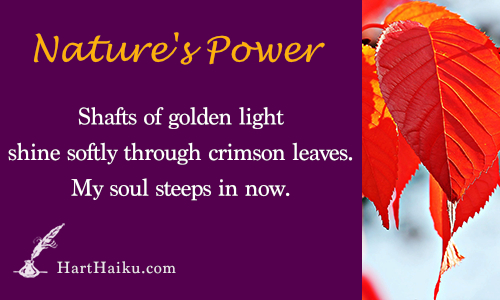 Nature's Power | Shafts of golden light shine softly through crimson leaves. My soul seeps in now. | HartHaiku.com