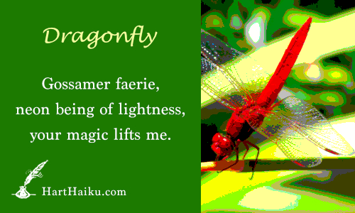 Dragonfly | Gossaner faerie, neon being of lightness, your magic lifts me. | HartHaiku.com
