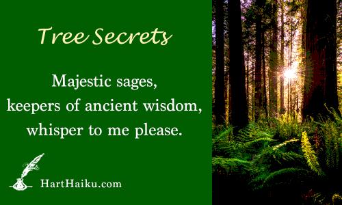 Tree Secrets | Majestic sages, keepers of ancient wisdom, whisper to me please. | HartHaiku.com